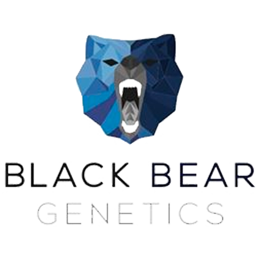 Black Bear Genetics | Maine Cannabis Products & Medical Marijuana Dispensary