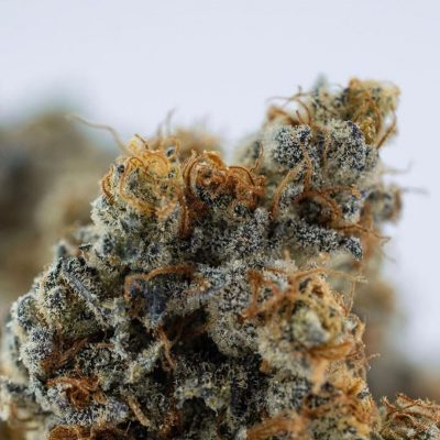 House of Hash - South Portland, ME | Medical Cannabis Storefront | Maine's Best Hash Makers